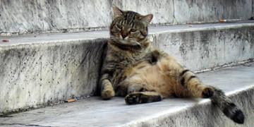 Корм кота в жару