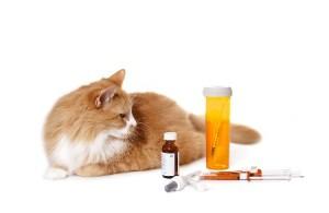 Корм для кошки диабетика