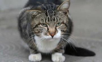 запор у кота чем лечить