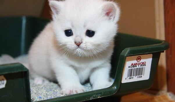 Питание при запорах у котов