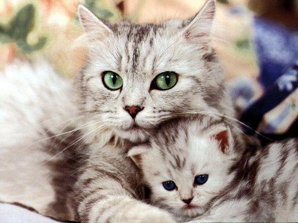 Беременная кошка с котятами
