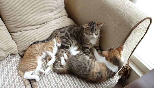 Если кот постоянно лижется могут ли быть это глисты