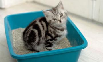 Кот ест наполнитель, что делать?