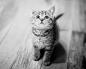 Как научить котенка есть самостоятельно