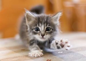 Кормление котят после рождения